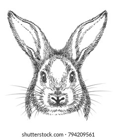 Bunny drawing. Vintage hand drawn rabbit face, vector sketch or engraving hare illustration