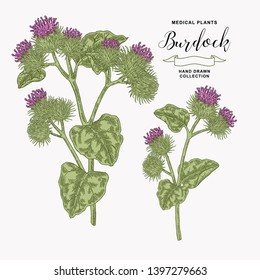 Burdock plant hand drawn. Medical and cosmetic herb. Vector illustration.