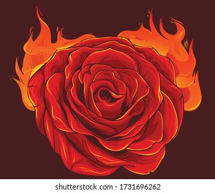 The burning dark red rose is awesome