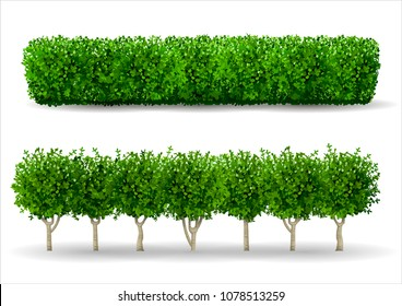 Bush in the form of a green hedge. Ornamental plant. The garden or the Park. Set of fences. Vector graphics