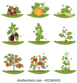 bush fruit-bearing plants. isolated cultured plants. vector. Vegetarian food icon set.