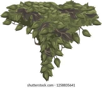 Bush grape or three-leaved wild vine cayratia (Cayratia trifolia) liana ivy plant bush vector illustration - illustration of bush for decorate the garden beautifully. - Vector