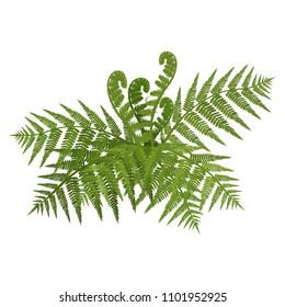 Bush of green wide open leaves of fern vector illustration