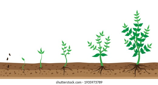 Bush growth in flat style. Stock image. EPS 10.