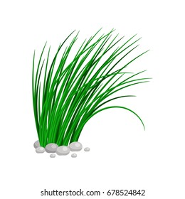 Bush of tall green grass isolated on white background. vector illustration