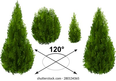 Bush, thuja. Isometric trees in vector