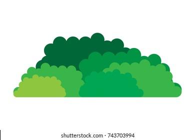 Bushes Natural Wild