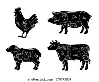 butchers guide symbols vector illustration on white