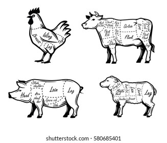 butchers guide symbols vector illustration on white