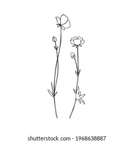 Buttercup flower or Crowfoot twig set vector illustration isolated on white background, ink sketch, decorative herbal doodle, line art for design medicine, wedding invitation, greeting card, cosmetic