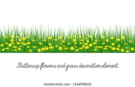 Buttercup flowers and grass decoration element, isolated on transparent background, cartoon vector illustration.