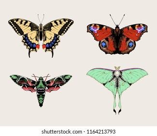 Butterflies and moths: Papilio machaon (common yellow swallowtail), Aglais io (European peacock), oleander hawk-moth, Actias selene (luna moth, moon moth). Set of vector hand drawn illustrations.