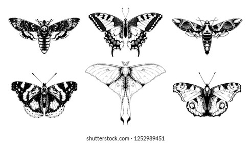 Butterflies and moths set vector hand drawn illustrations. Papilio machaon, Aglais io (European peacock), oleander hawk-moth, Actias selene (luna moth), death's-head moth, red admiral.