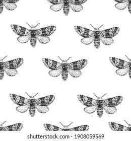Butterflies. Seamless vector pattern illustration. Entomological collection. Retro vintage style.