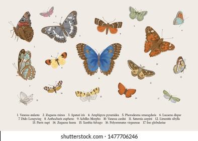 Butterflies. Set of elements for design. Vector vintage classic illustration. Colorful