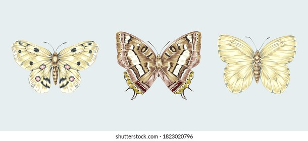 Butterflies set isolated on grey background. Vector vintage illustrations. Hand drawn elements. Floral clip art. Exotic butterfly botanical print.