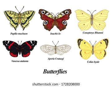 Butterflies set. Vector illustration. Colorful vintage butterfly collection.