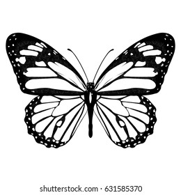 Butterfly black and white, view from above, isolated on white background, vector insect, monochrome illustration, coloring book, banner, card, poster, flyer