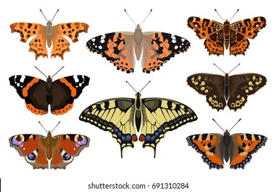 Butterfly collection - vector color illustration