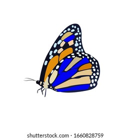 Butterfly Colorful Cartoon Vector Illustration