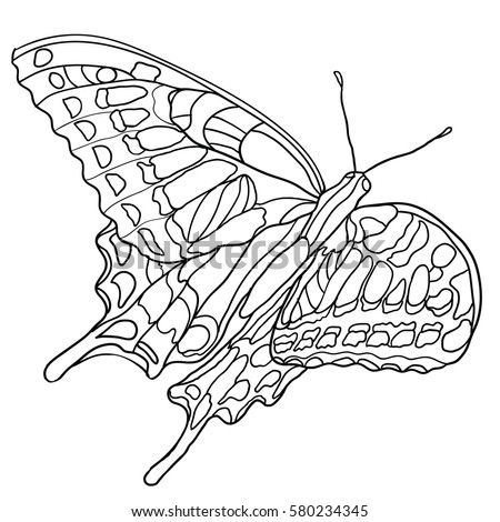 Butterfly Coloring Book For Adult And Older Children Page With Decorative Vintage