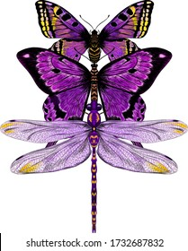 butterfly and dragonfly purple and yellow composition insects vector illustration