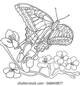 Butterfly and flowers. Coloring book for adult and older children. Coloring page with decorative vintage. Outline hand drawn.  Vector illustration garden. Hand-drawn zentangle style. Black and White