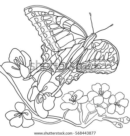 Butterfly Flowers Coloring Book Adult Older Stock Vector (Royalty ...