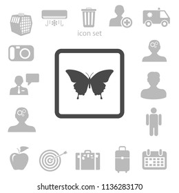 butterfly framed vector illustration