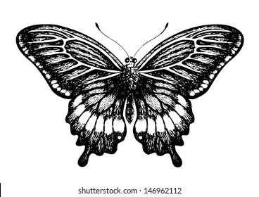 Butterfly, graphic style, hand drawn, black and white isolated vector illustration