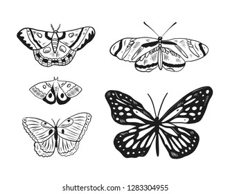 Butterfly hand drawn vector illustration. Animal cartoon style. Isolated on white background.