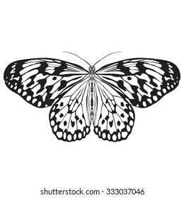 Butterfly Idea Leuconoe. Paper Kite . Sketch of  Butterfly.  Butterfly isolated on white background.  Butterfly Design for coloring book.  hand-drawn  Butterfly. Hand drawn  Vector illustration