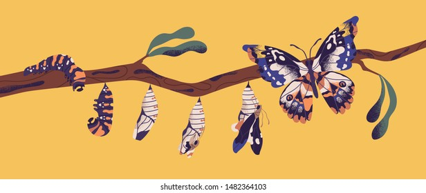 Butterfly life cycle - caterpillar, larva, pupa, imago eclosion. Stages of metamorphosis, growth and transformation process of winged insect on tree branch. Flat cartoon colorful vector illustration.