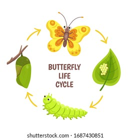 Butterfly life cycle. Insect emergence, transformation or metamorphosis. Caterpillar development stages. Biology cycle vector illustration