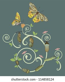 Butterfly life cycle, Vector illustration with simple gradients