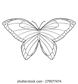 Butterfly line art illustration
