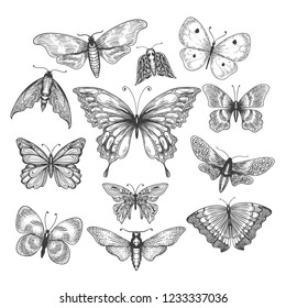 Butterfly, mariposa sketch. Vector illustration farfalle butterflies isolated on white background