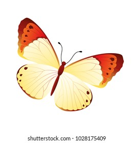 butterfly on a homogeneous background. Vector illustration