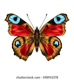butterfly with open wings top view, the symmetrical drawing, graphics, sketch, vector, color image, wings of red, yellow and blue colors