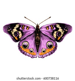 butterfly with open wings top view of symmetry, sketch the graph of vector color drawing butterfly with pink wings