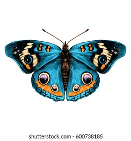 butterfly with open wings top view of symmetry, sketch the graph of vector color drawing butterfly with blue wings