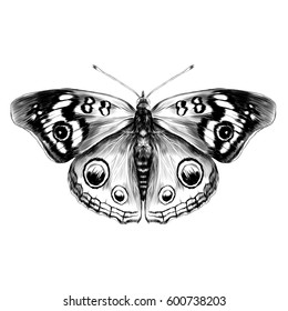 butterfly with open wings top view of symmetry, sketch graphics vector black and white drawing