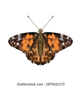 Butterfly Painted lady or Vanessa Cardui  isolated on white background.Vector illustration.