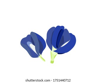 Butterfly pea flower isolated on white. vector illustration.