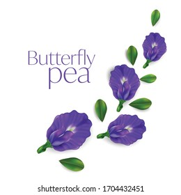 Butterfly pea flower vector illustration on white background , Clitoria ternatea