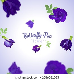 Butterfly pea flowers and leaf on blue background template. Vector set of blooming floral for wedding invitations, greeting card and pattern design.