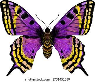 butterfly purple yellow Morph fabulous beautiful