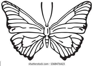 Butterfly - Retro Ad Art Illustration