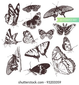 Butterfly set: entomological collection of highly detailed hand drawn butterflies.