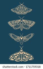 Butterfly. Seth night moths. Insects. Simple vector illustration.